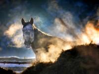 Konie9
